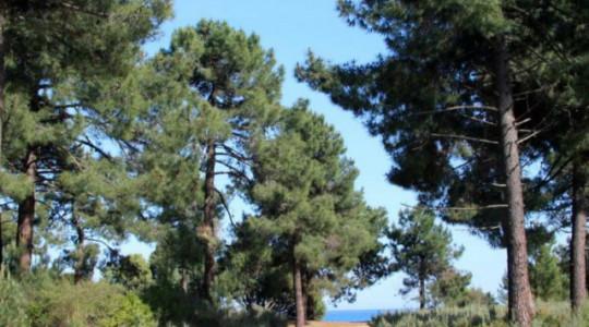 Pinia : là où la forêt rejoint la mer…